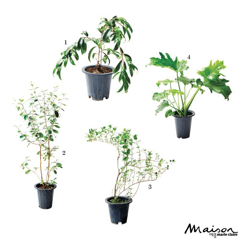 추천 식물