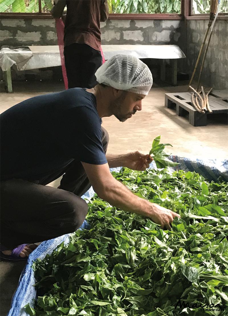 도이 치앙다오 유기농 홍차 프로젝트