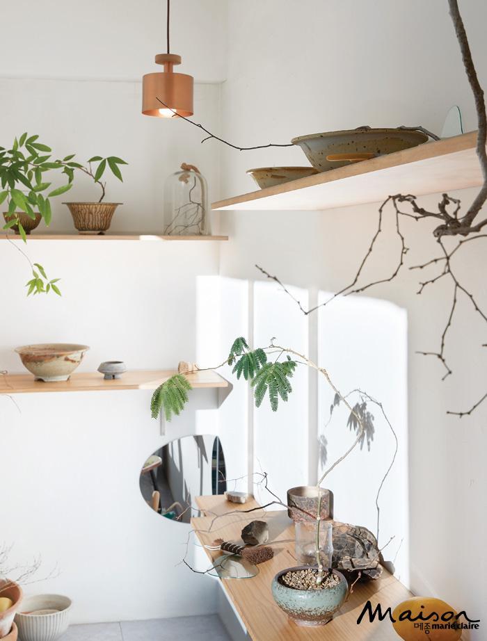 식물의 취향