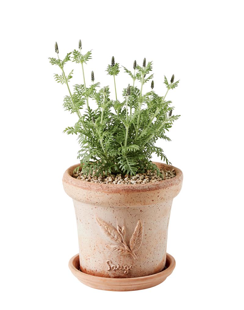 가드닝 식물 추천