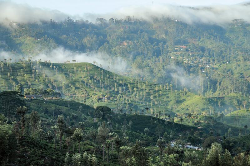 스리랑카 하푸탈레