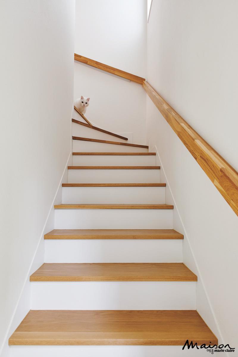 계단, 인테리어, 고양이