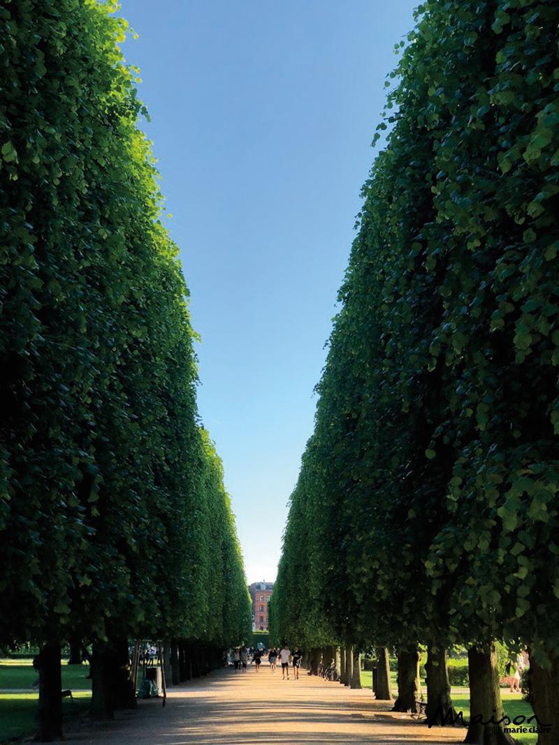 킹스가든, 코펜하겐, 아름드리나무