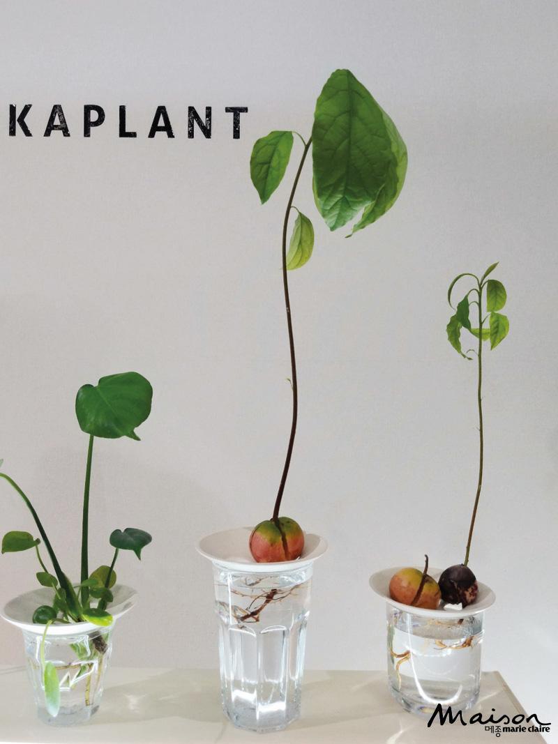피키플랜트, 식물 인테리어 트레이 수생식물