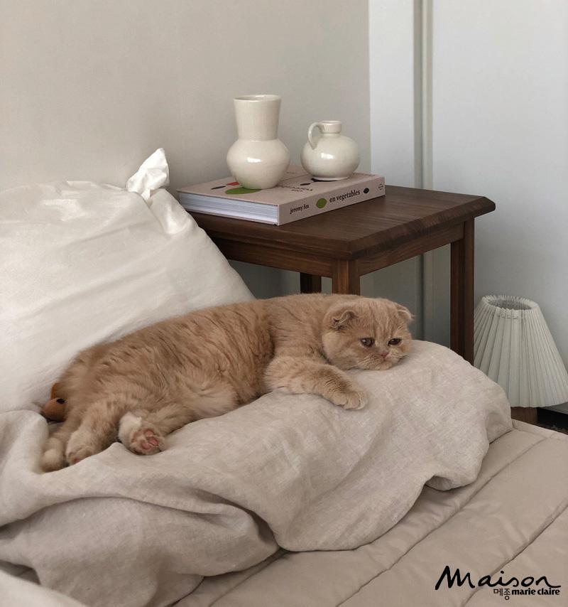 스코티시 폴드, 츄르, 고양이, 반려묘