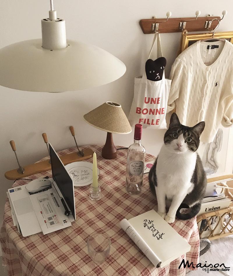 모드니, 고양이, 반려묘
