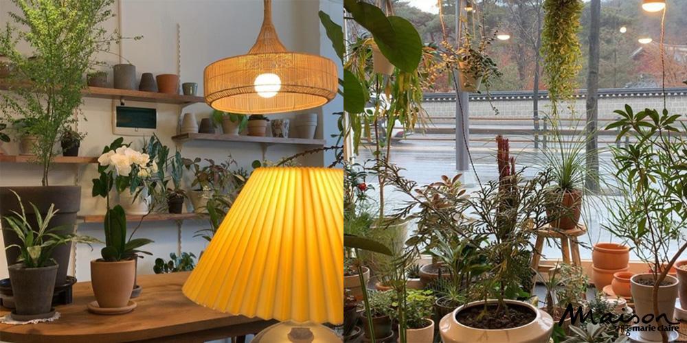 그라운드, 플랜트숍, 식물, 미니화분, 식물숍
