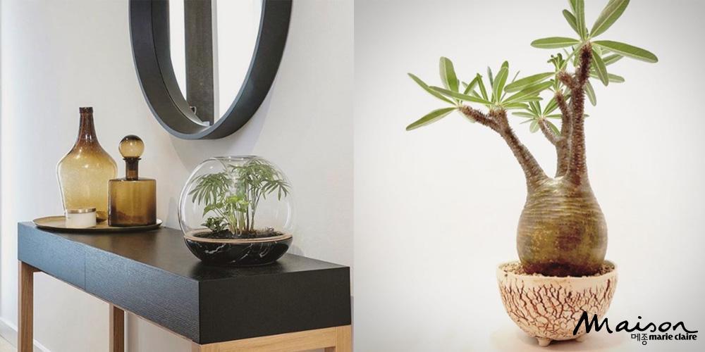 플랜트오드, 식물, 플랜트숍, 플랜테리어, 괴근식물