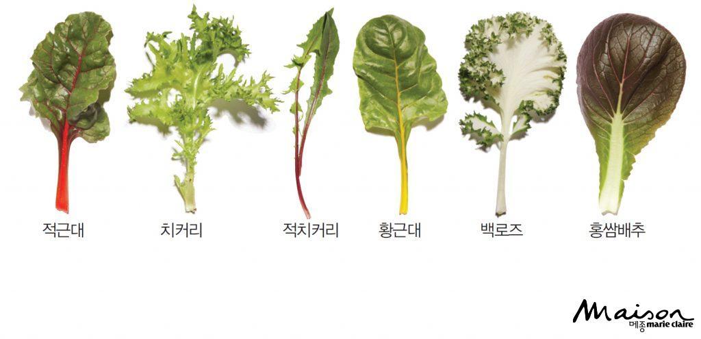 쌈채소 채소 건강